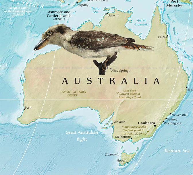 Kookaburra Featured Natural In Around The World From 80 Countries